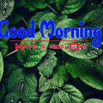 Nature Good Morning Imges Pics