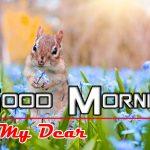 Nature Good Morning Photo Free download