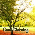 Nature Good Morning Images pictures free download