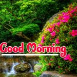 9518+ Good Morning Flowers Pictures For Whatsapp