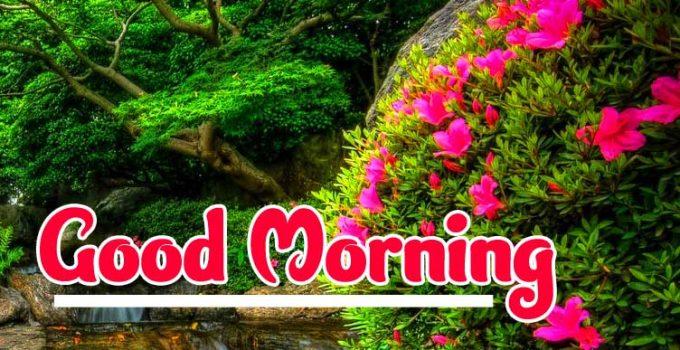 Nature Good Morning Images pics hd