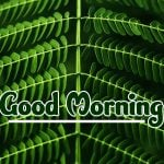 Nature Good Morning Images photo pics hd