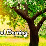 Nature Good Morning Images pictures free hd