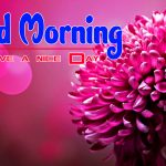 New Flowers Good Morning Hd Download