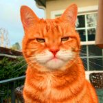New Free Funny Cat Hd Free Download