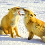 New Funny Animal Photo Download