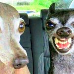 New Funny Animal Photo Pics