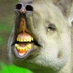 New Funny Animal wallpaper Pics