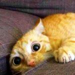 New Funny Cat Pics For Facebook