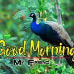 New Happy Good Morning Photo Free