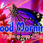 New Happy Good Morning Pics hd