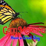 New Hd Pics Happy Good Morning Pics