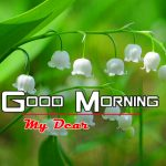 New Nature Good Morning Photo Pics