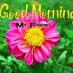 New Pics Flowers Good Morning Wallpaper