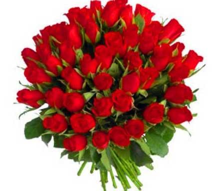 Whatsapp DP Images Wallpaper Red Rose