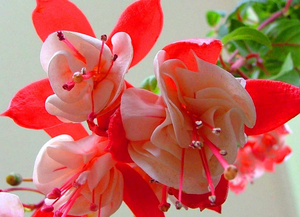 Whatsapp DP Images Wallpaper With Beautiful Flower