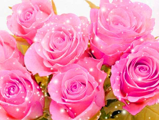 Full HDWhatsapp DP Images Wallpaper With Beautiful Rose