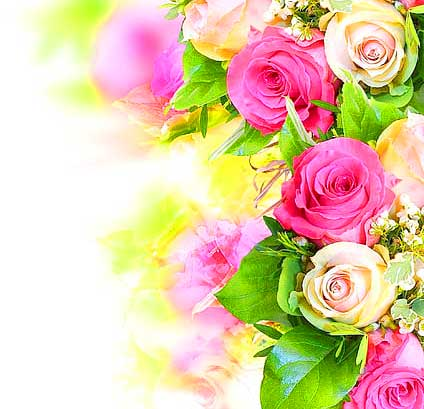 Full HDWhatsapp DP Images Pictures Roses