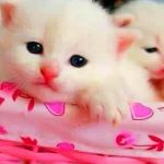 Nice Whatsapp DP Profile Images pics photo hd