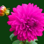 Nice Whatsapp DP Images photo hd