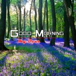 Pics Nature Good Morning Images