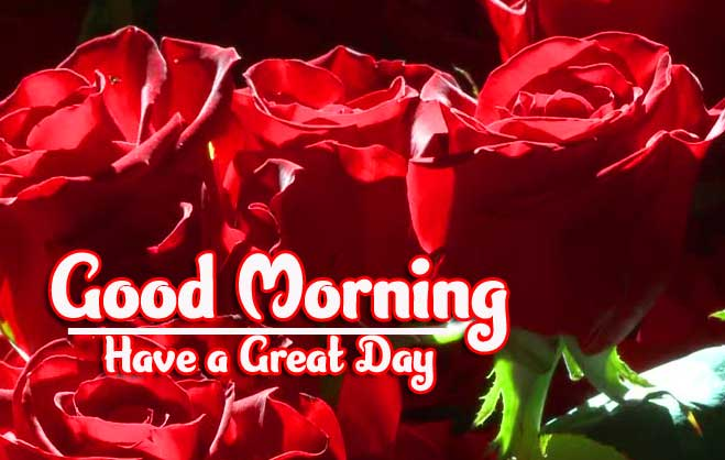 Beautiful Red Rose Good Morning Images Pics For Facebook