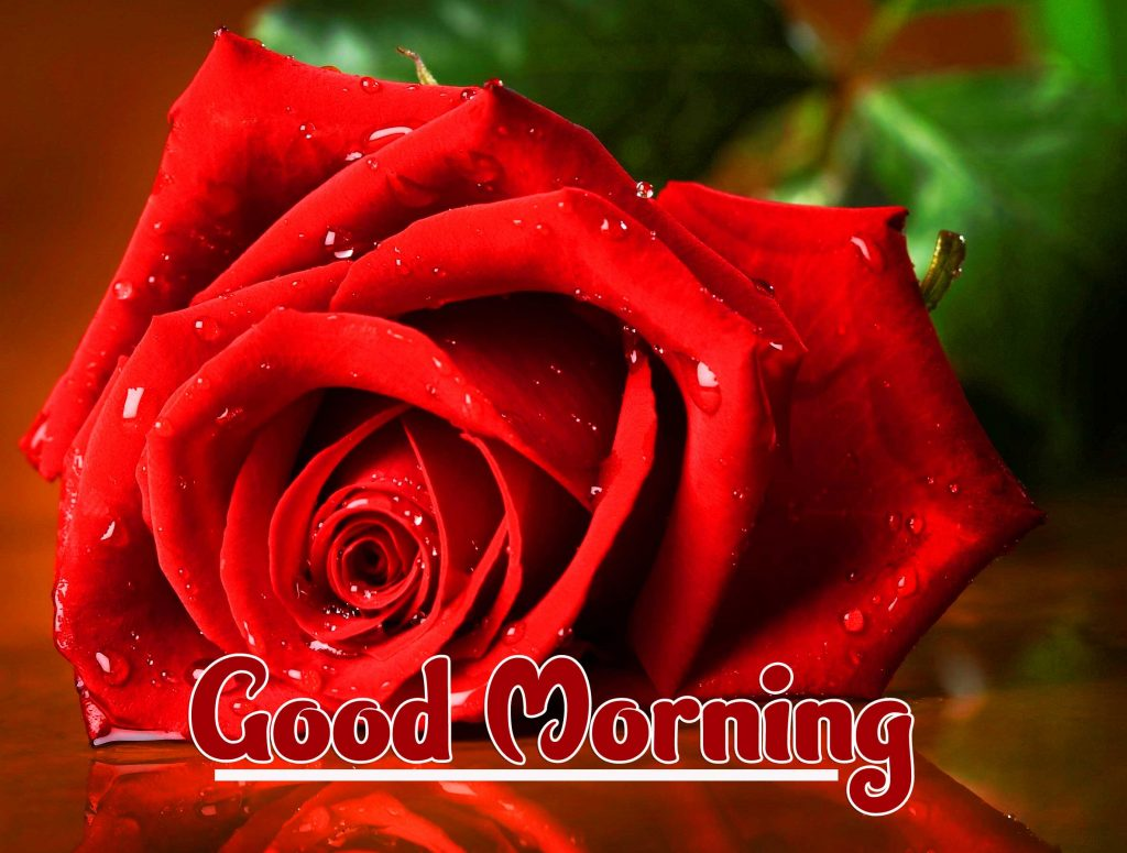 Beautiful Red Rose Good Morning Images Pics Download In HD