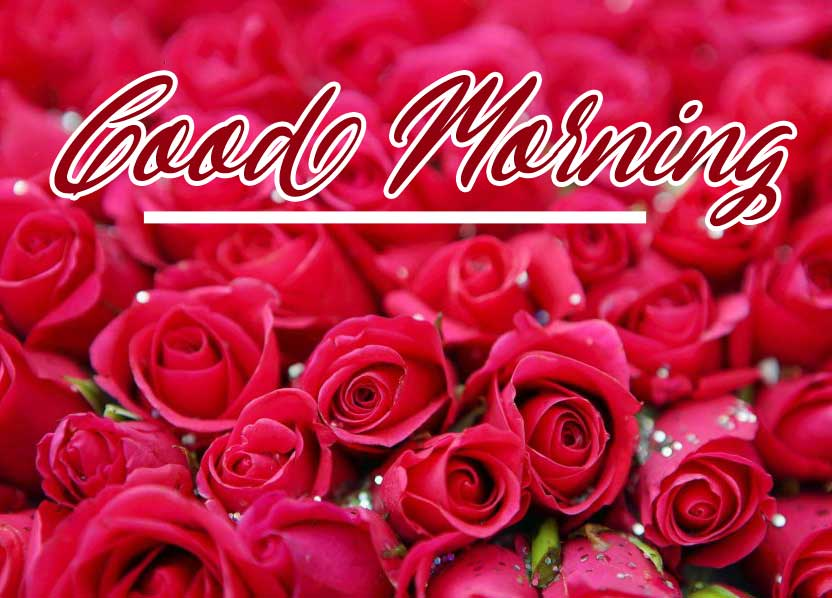 Beautiful Red Rose Good Morning Images Wallpaper for girlfriend