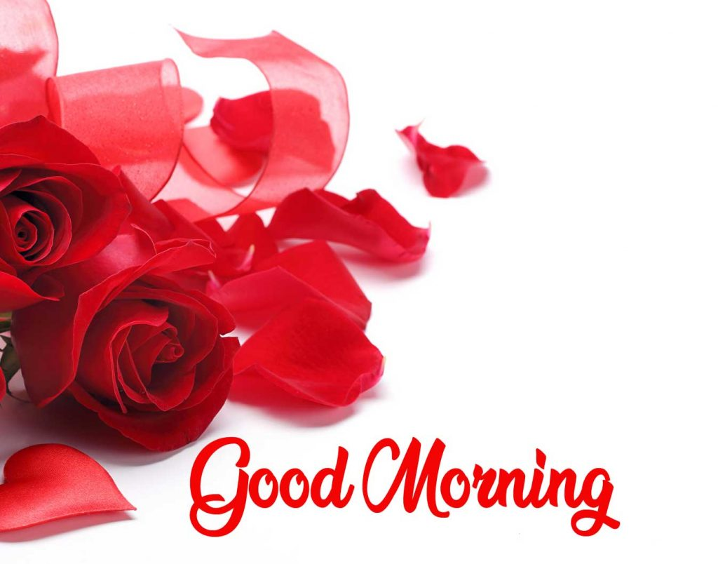 Beautiful Red Rose Good Morning Images Pics Free Download