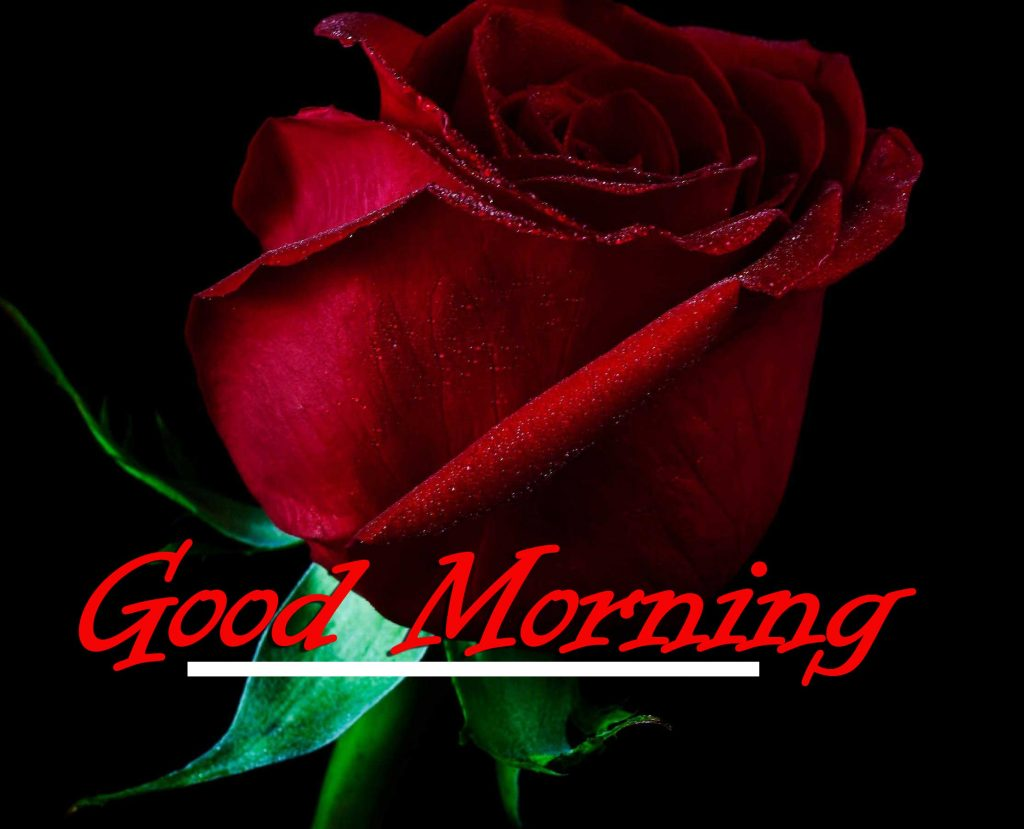 Beautiful Red Rose Good Morning Images pics Wallpaper Free