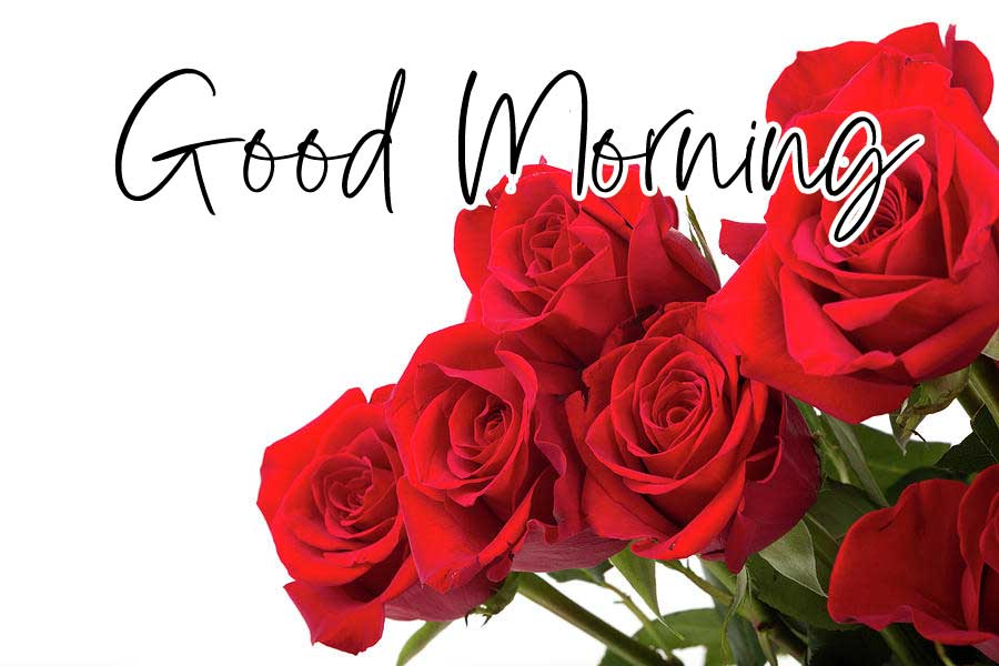 Beautiful Red Rose Good Morning Images Pics HD