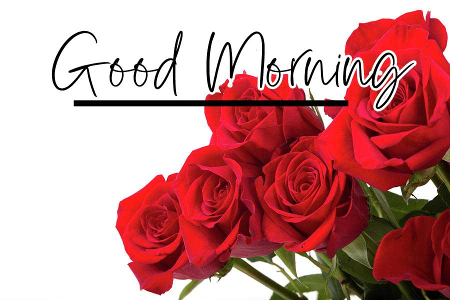 Beautiful Red Rose Good Morning Images Pics Wallpaper Download