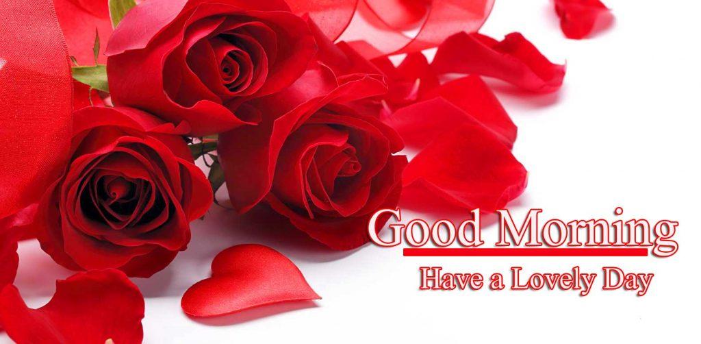 Beautiful Red Rose Good Morning Images Wallpaper pics Free Download