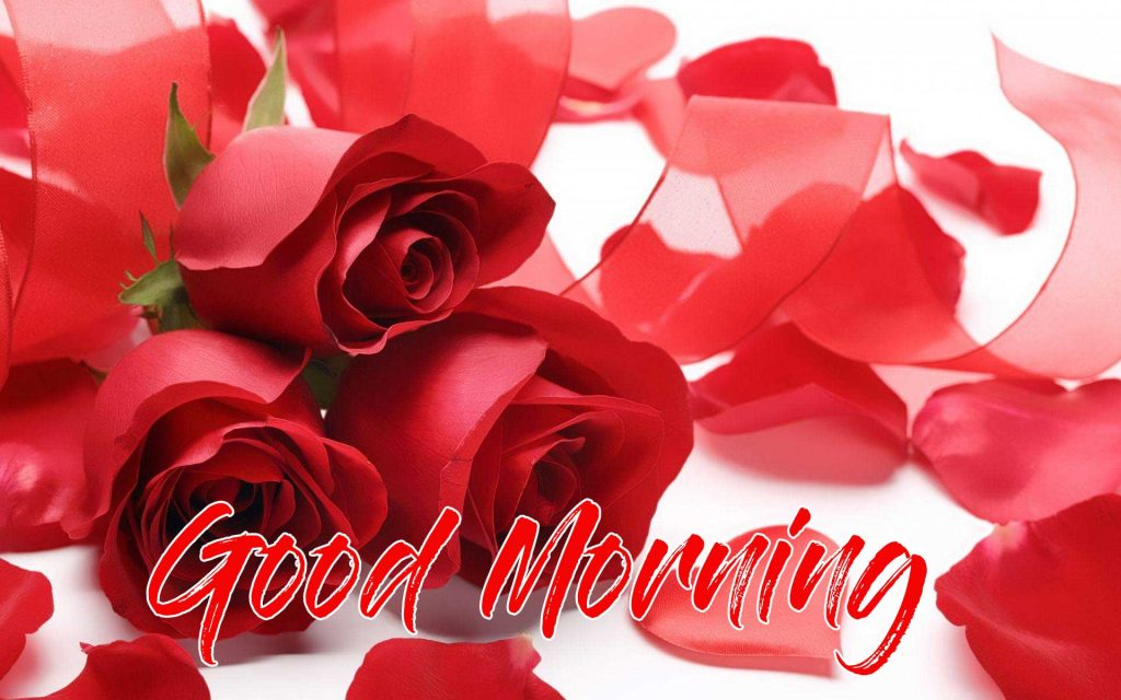 Beautiful Red Rose Good Morning Images Pics Latest Download