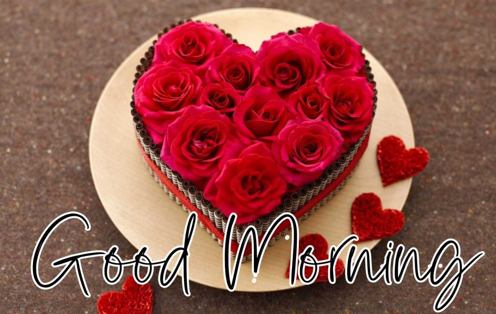 Best Free Beautiful Red Rose Good Morning Images Pics Download