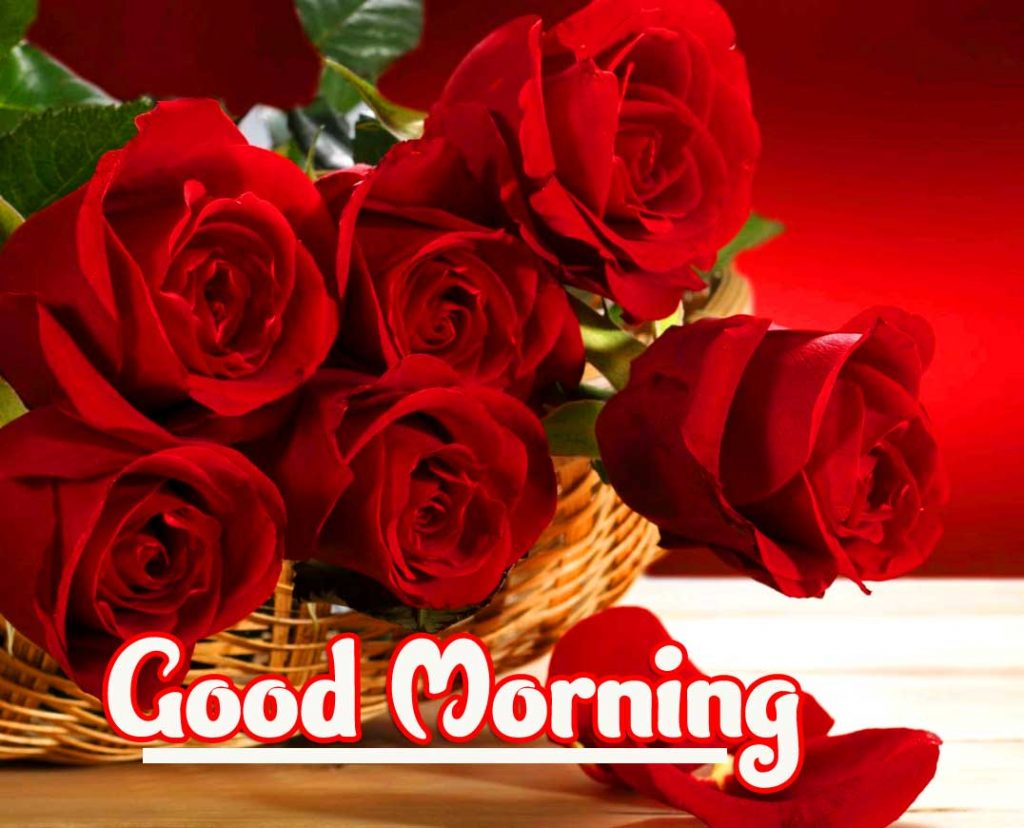 Beautiful Red Rose Good Morning Images Pics Wallpaper