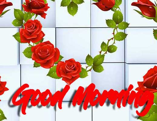 Top Free Best Red Rose Good Morning Images Pics Download