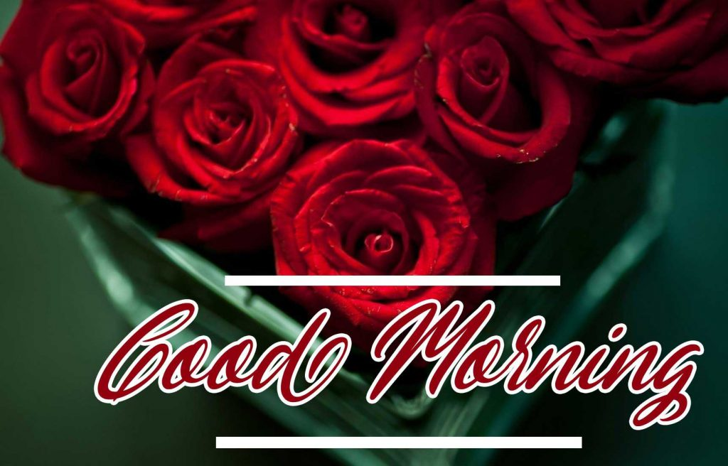 Best Red Rose Good Morning Images Wallpaper Free Download Free