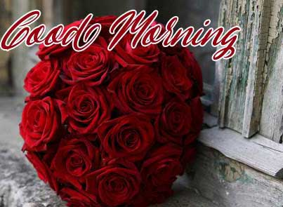 Best Red Rose Good Morning Images Pictures for Facebook