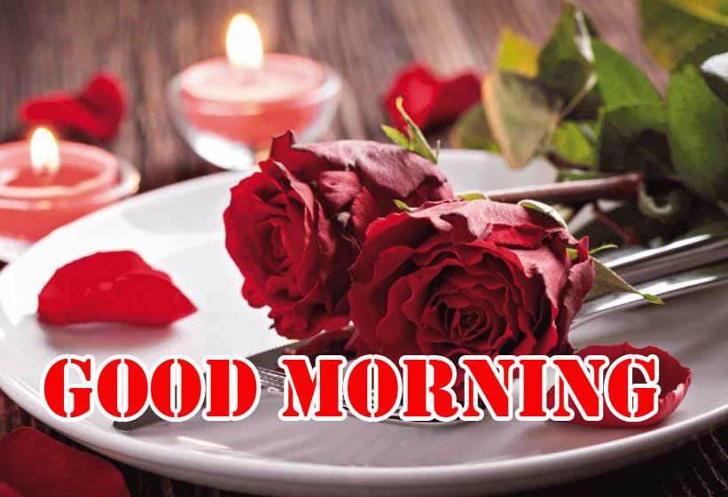 Best Red Rose Good Morning Images Wallpaper Latest Download