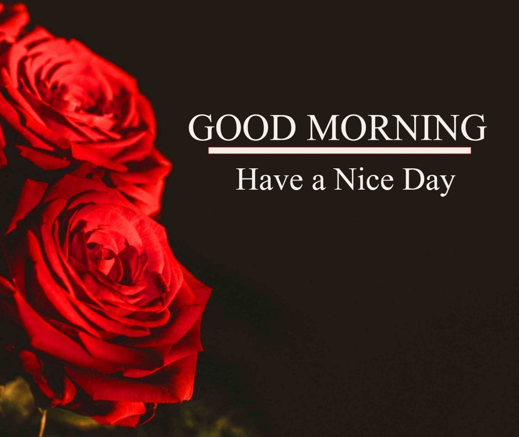 Best Red Rose Good Morning Images Pics Download