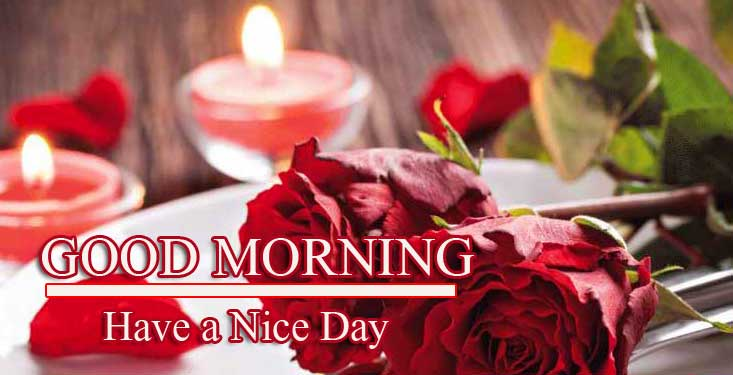Best Red Rose Good Morning Images Pics Free Download