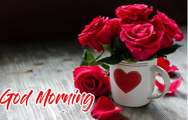 New Free Best Red Rose Good Morning Images Pics Download