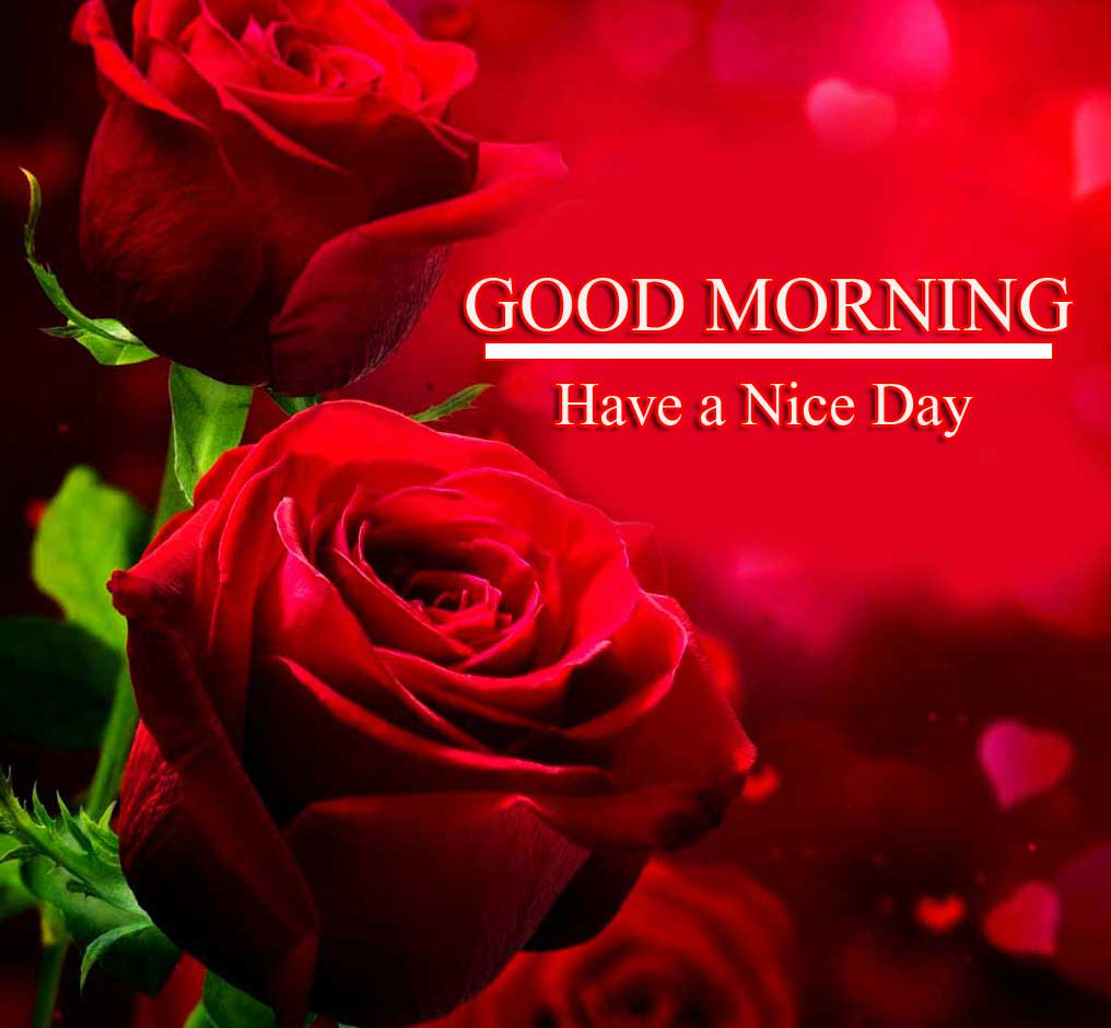 Beautiful Red Rose Good Morning Images Pics HD Download