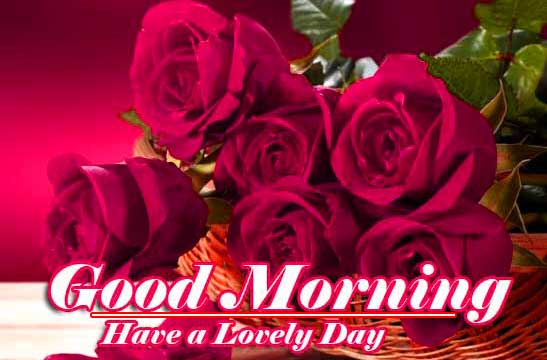 Best Red Rose Good Morning Images Wallpaper Free