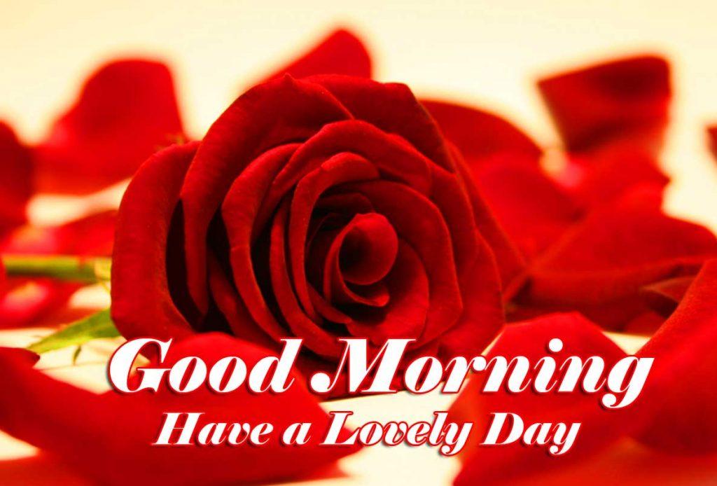 Best Red Rose Good Morning Images Wallpaper Free Download