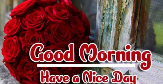 Red Rose Good Morning Images photo hd