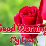 Red Rose Good Morning Images HD Download