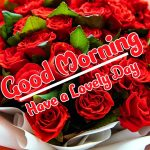 Red Rose Good Morning Images pictures free download