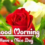 Red Rose Good Morning Images pics download